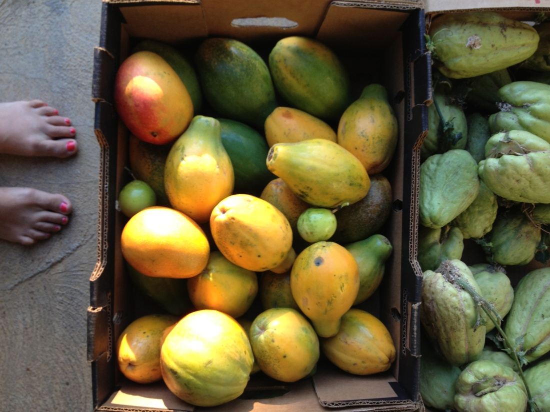 Mangoes and papayas fresh from the trees were in constant supply at the house.