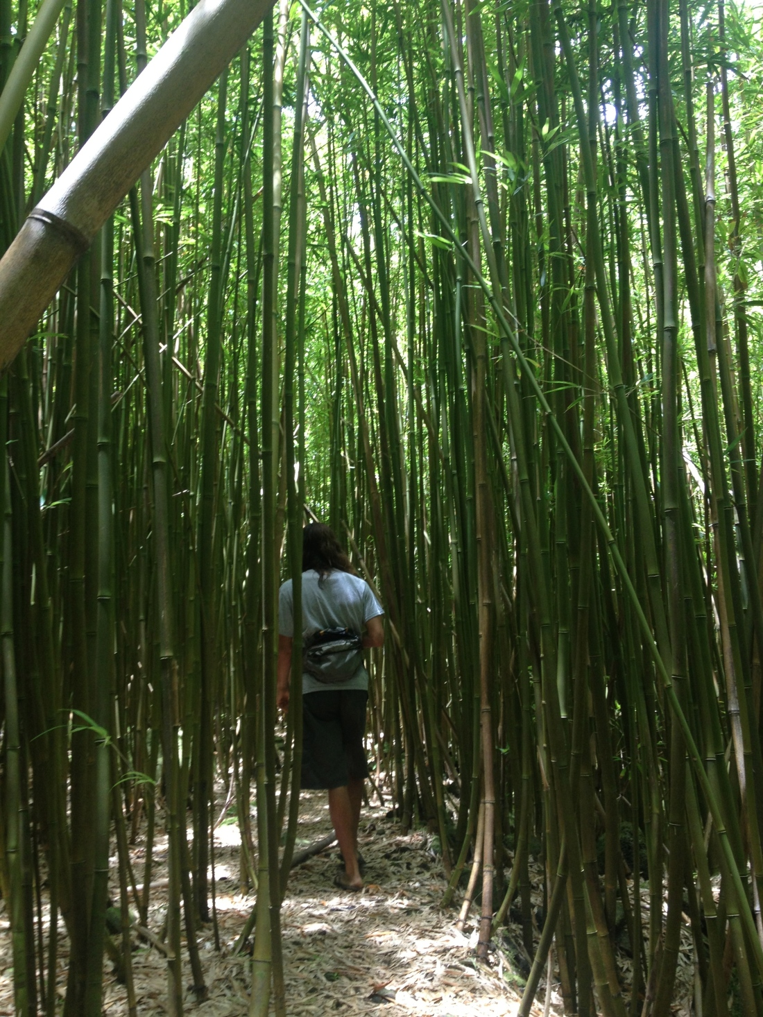 The stunning hidden bamboo gardens Michaelle took me to.