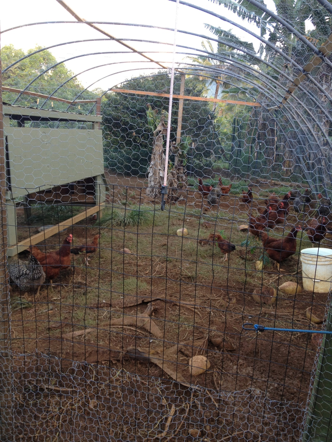 The chicken coup.