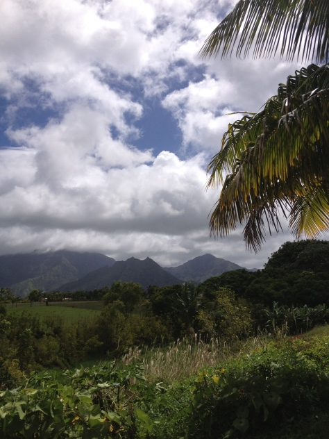 The view from Michaelle's property in the hills of Kauai just outside Hanalei.